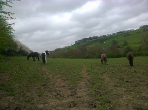 in field and spring ride through Roman lakes 004